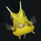 Tweety Bird The Cowfish by Jenifer