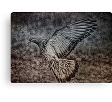 For The Pigeon Lover Canvas Print
