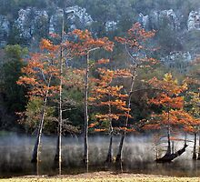 Cypress And Smoke by Carolyn  Fletcher