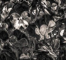 Silver Pansies by Steve Walser
