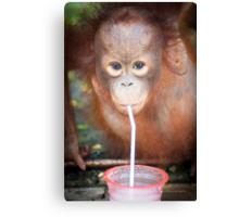 Young Orphan Orangutan ~ Borneo Canvas Print