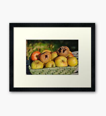 Basket of bad apples Framed Print