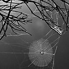 Spider Web iPad Case by pennyswork