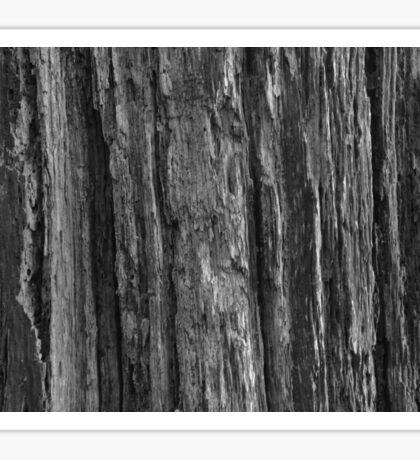 Woodland Bark  Sticker