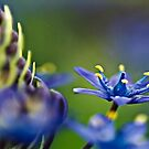 Wild flowers by kellimays