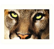 Cougar Eyes Art Print