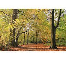 Autumn Forest Path Photographic Print