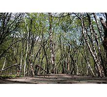 Tangled Forest - Nature Photography Photographic Print