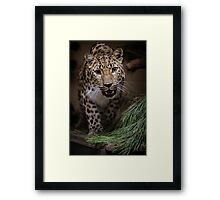 Russian Spotted Beauty Framed Print