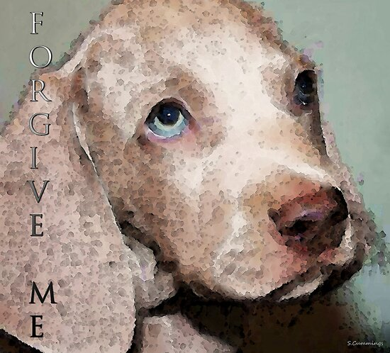 Weimaraner Dog Art - Forgive Me by Sharon Cummings