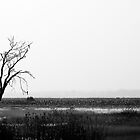 Dead trees by studioomg