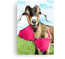 Goat Art - Oh You're Home Canvas Print
