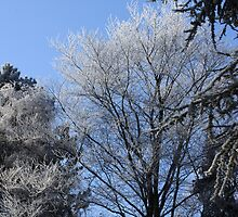 Trees in winter by Jicha