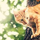 Cat in a tree by netza