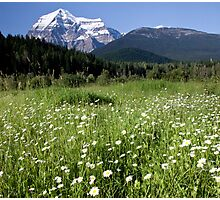 Meadow, Mt Robson, BC Photographic Print
