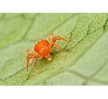 Mite-y Cute Photographic Print