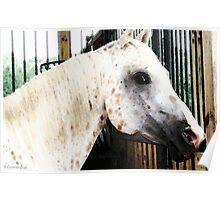 Stable Eyes Horse Art Poster