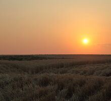 Corner Of The Crop  by Saraswati-she