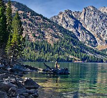 Jenny Lake Shoreline by Robert H Carney