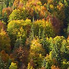Fall Colors by Walter Quirtmair