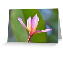 Jayne Eldred's 'Frangipani's for Christmas' Greeting Card