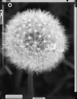Dandelion by Walter Quirtmair