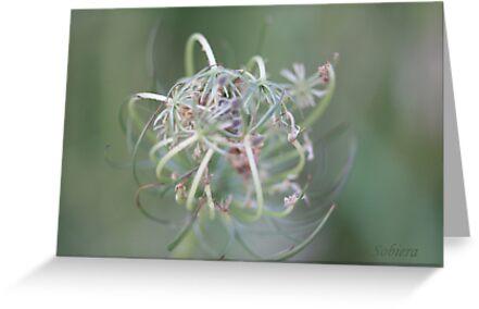 Delicately Soft Pastel by Rosemary Sobiera