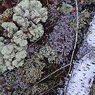 Silver and Lichen by Dawne Olson