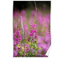 fireweed 3 Poster