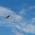 Pelican  by Stephen  Shelley