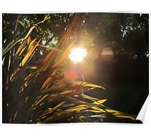 Sunset and flax plant Poster
