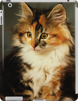 iPad Cover-Calico Cat by Pamela Phelps