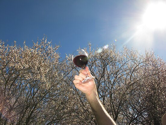 A glass of wine in the orchard by Stephen  Shelley