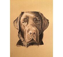 Rosie the beautiful chocolate labrador Photographic Print