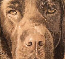 Rosie the beautiful chocolate labrador Sticker