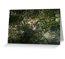 Misty Canopy Greeting Card