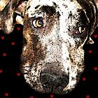 Catahoula Leopard Dog - Lover by Sharon Cummings
