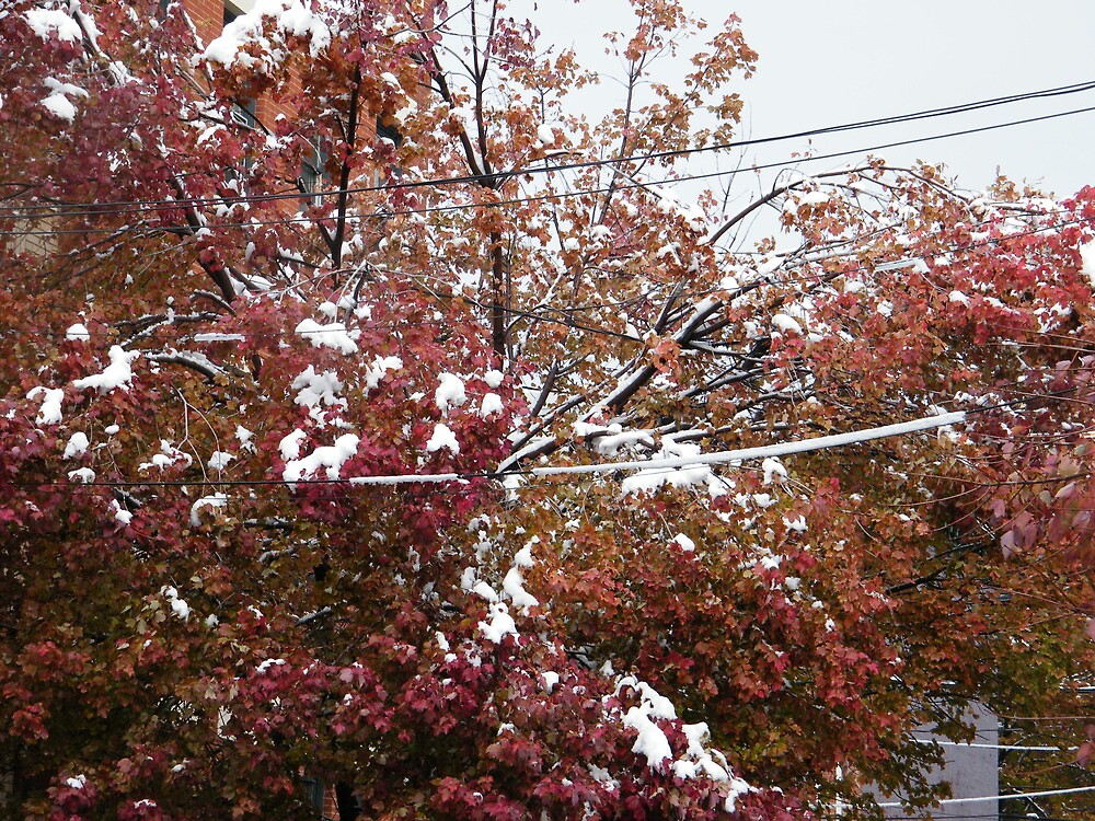 Autumn Colors and Winter Colors Together Due to An Early Snowfall, Jersey City, New Jersey by lenspiro