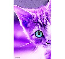 Cat Art - Peek A Boo Blue Photographic Print