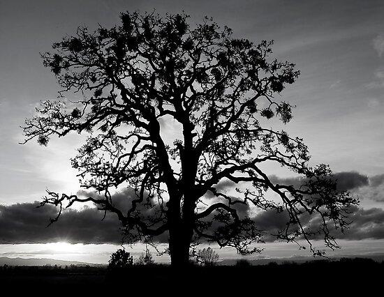 Lone Oak Silhouette by Nick Boren