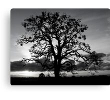 Lone Oak Silhouette Canvas Print