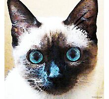 Siamese Cat Art - Black and Tan Photographic Print
