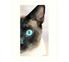 Siamese Cat Art - Half The Story Art Print