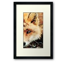 Soft Sly Fox Framed Print