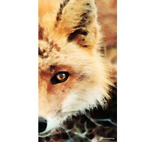 Soft Sly Fox Photographic Print