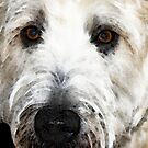 Wheaten Terrier - Happy Dog by Sharon Cummings