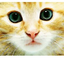 Cat Art - Whiskers Photographic Print