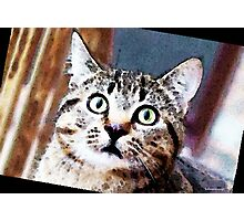 Cat Art - Who Me Photographic Print