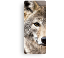 Wolves Art - Lone Wolf Canvas Print