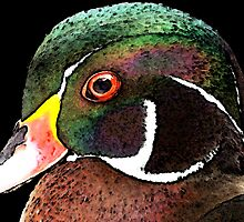 Wood Duck Art - Royalty by Sharon Cummings